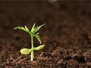 土壤监测,土壤污染程度,深圳检测机构